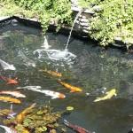Square Pond