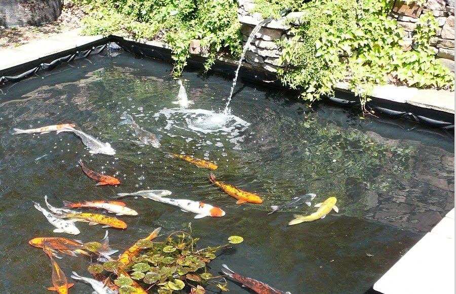 7 most breathtaking koi fish ponds qnud for Square pond ideas