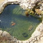 Stone Fish Pond