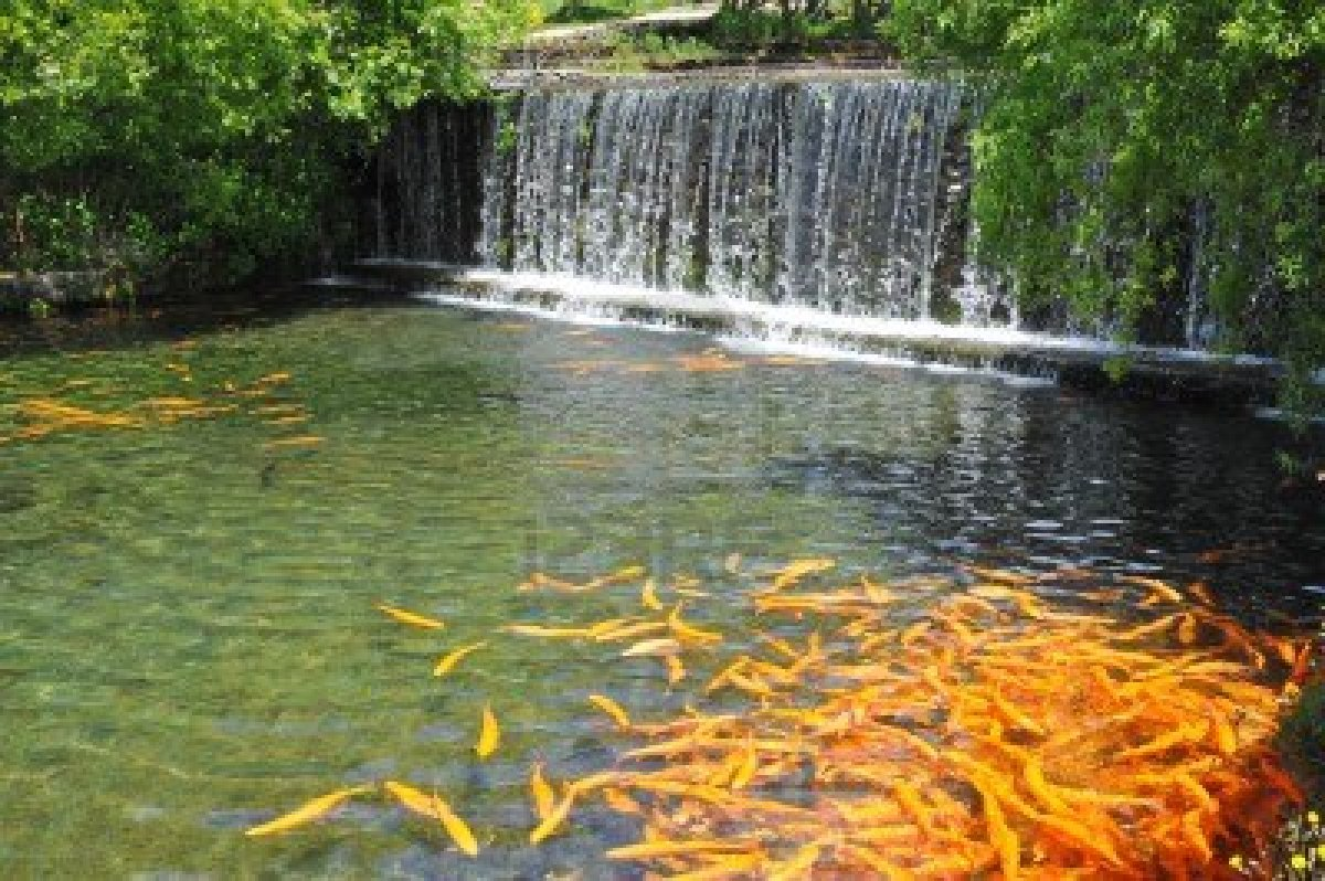 7 most breathtaking koi fish ponds qnud for Outdoor garden pool